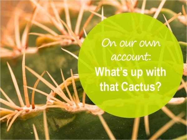 What's up with that Cactus?